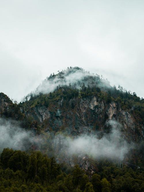 Foto stok gratis air, air terjun, alam, asap