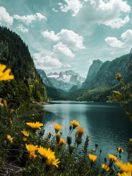 Foto stok gratis air, alam, Austria, bepergian
