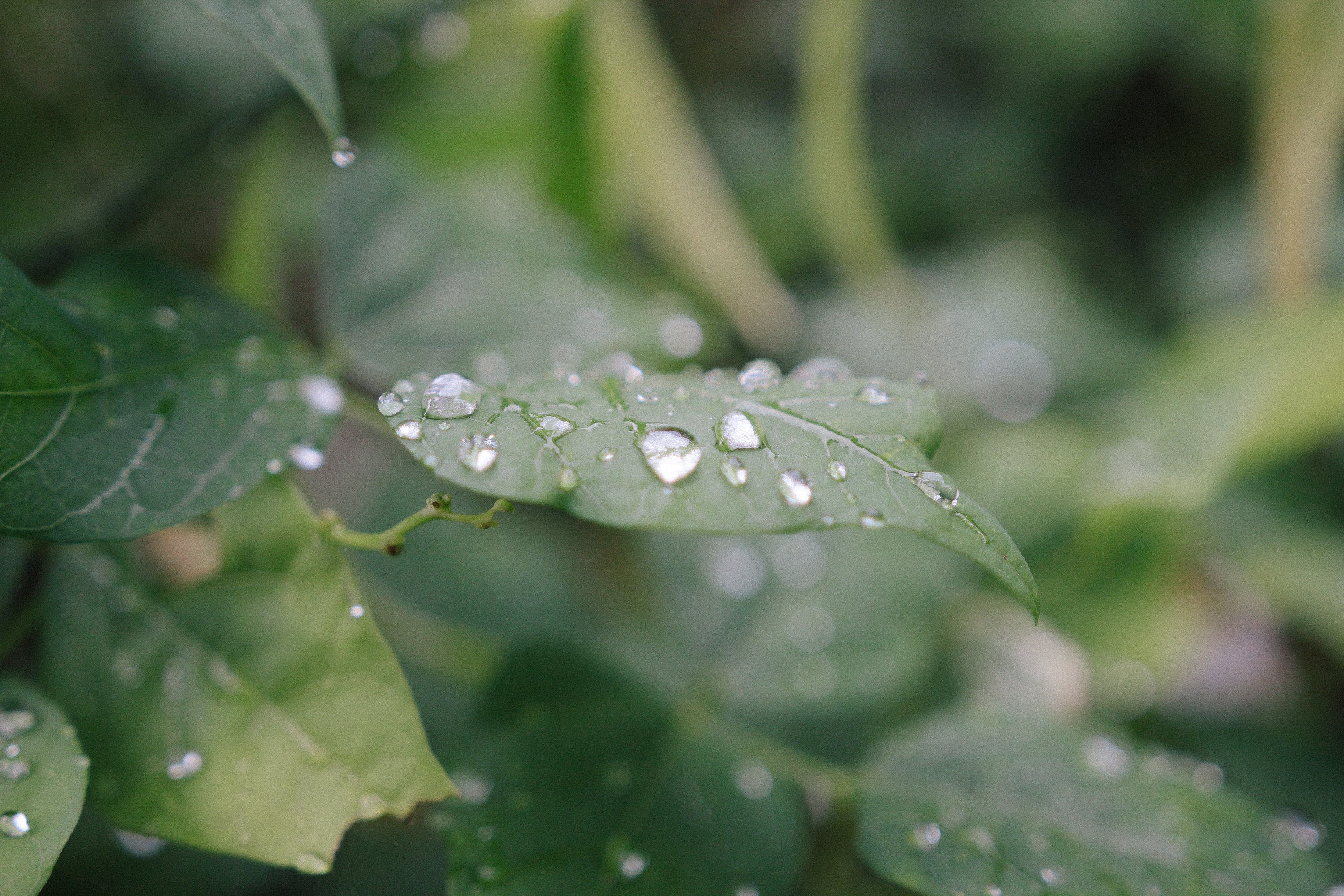 Bokeh Photography of Green Leaf