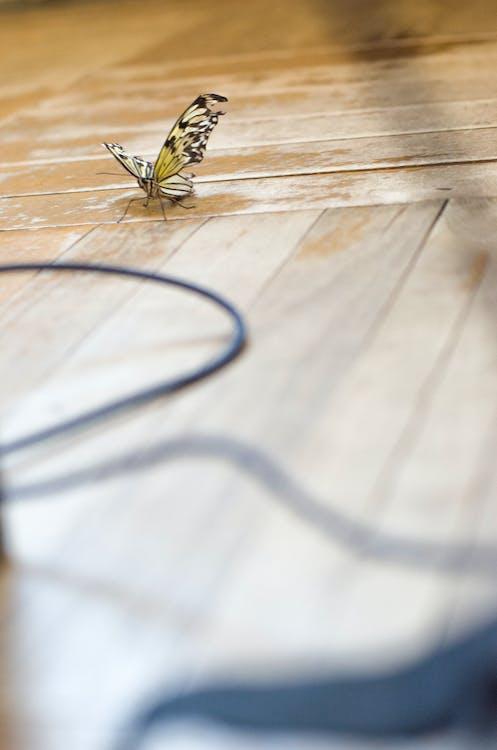kabel, kupu-kupu, lantai