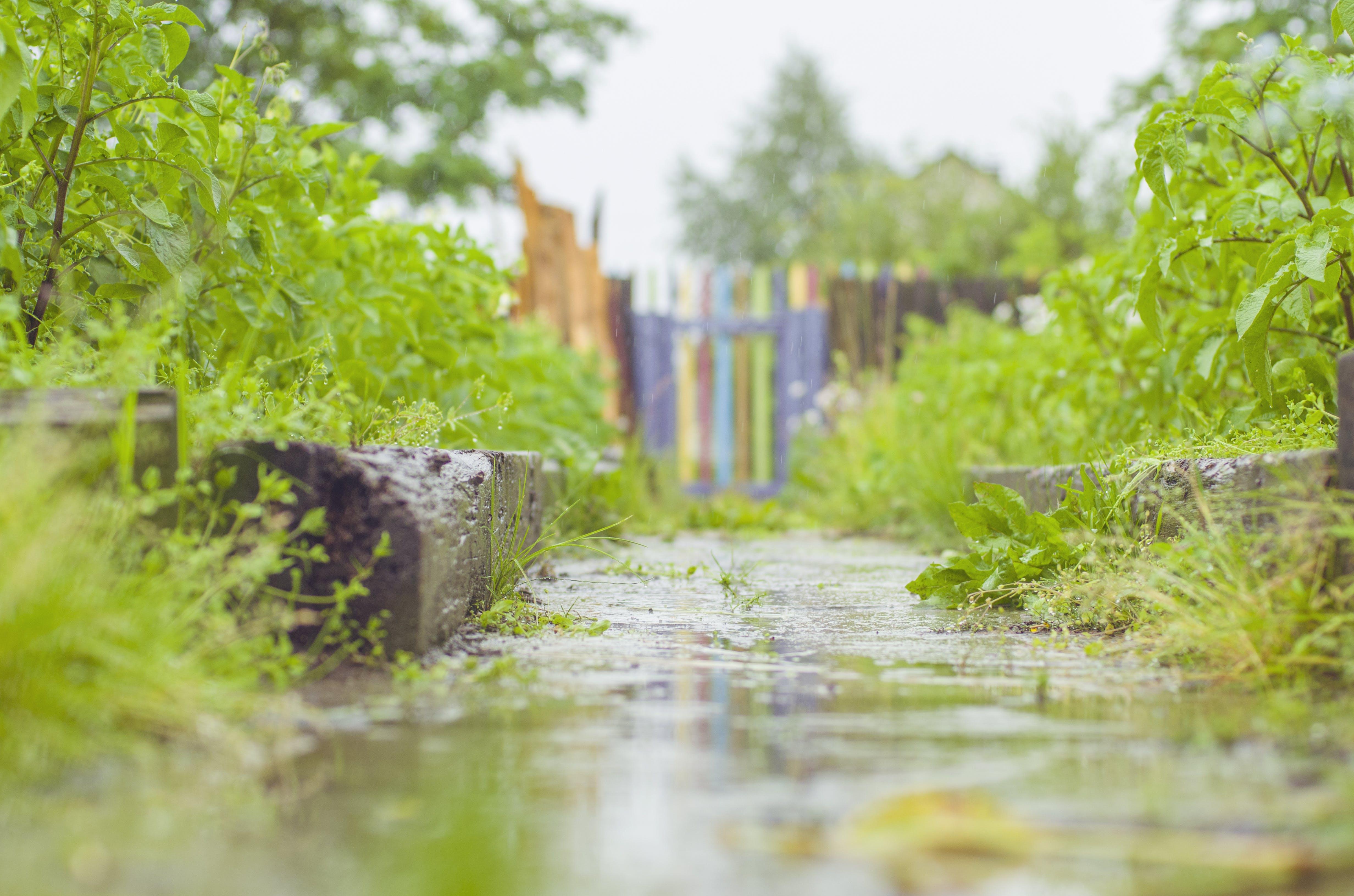 Free stock photo of countryside, grass, rain, rainy