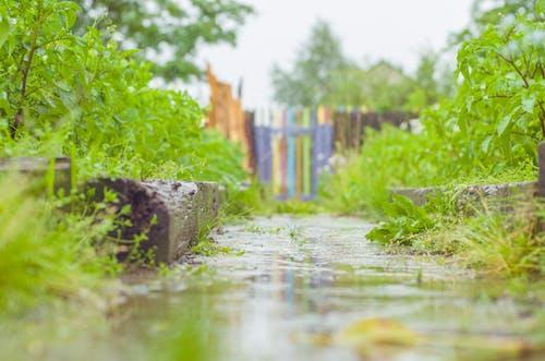 Foto profissional grátis de chuva, grama