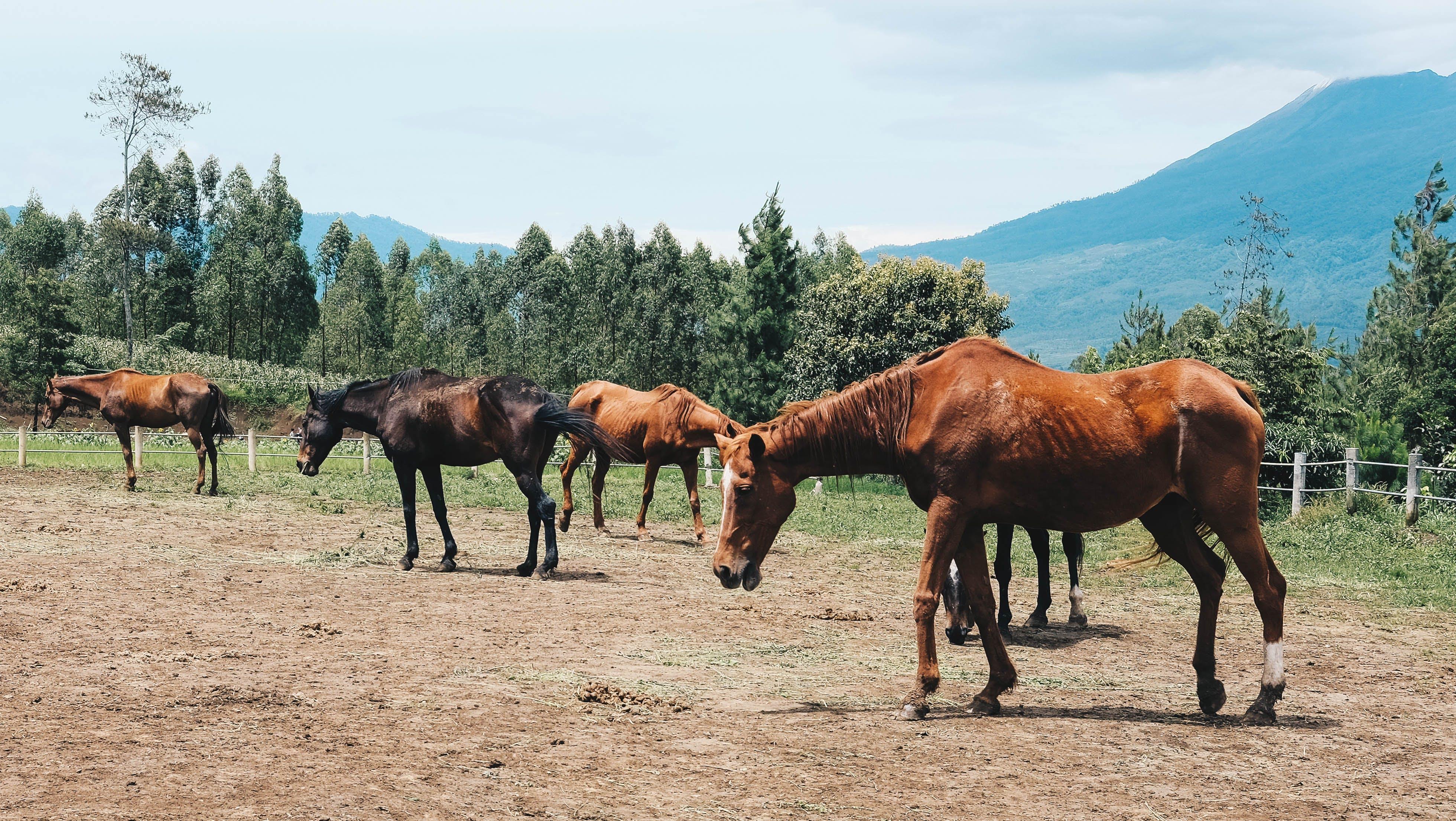 Základová fotografie zdarma na téma hora, kůň, ranč