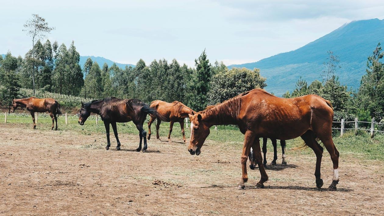 山, 牧場, 馬