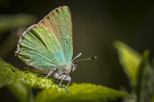 宏觀, 微妙, 微距攝影, 昆蟲 的 免费素材图片
