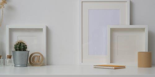 仙人掌, 內部, 創造力, 原本 的 免费素材图片