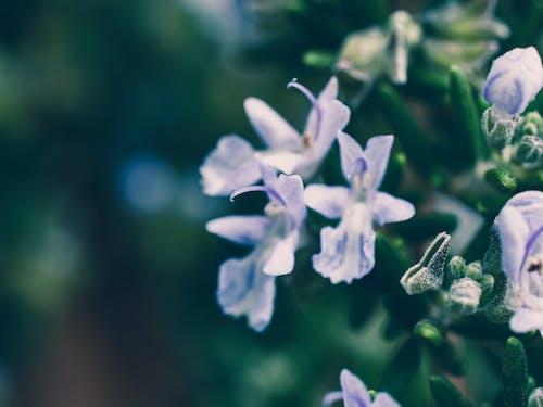 Bahçe, çiçek, çiçekli, doğa içeren Ücretsiz stok fotoğraf