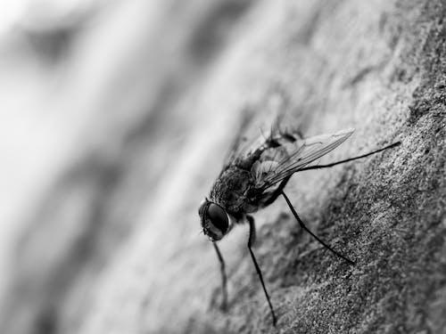 böcek, makro, sinek, siyah ve beyaz içeren Ücretsiz stok fotoğraf