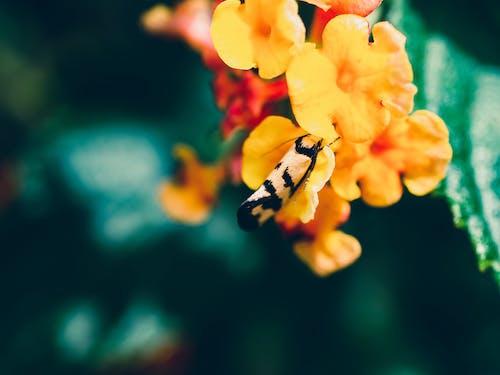 böcek, çiçek, çiçekli, doğa içeren Ücretsiz stok fotoğraf