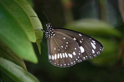 Black and White Spotted Butterfly on Green Leaf