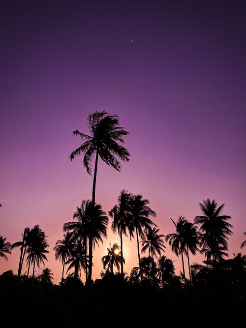 Scenic Photo Of Palm Trees During Dawn