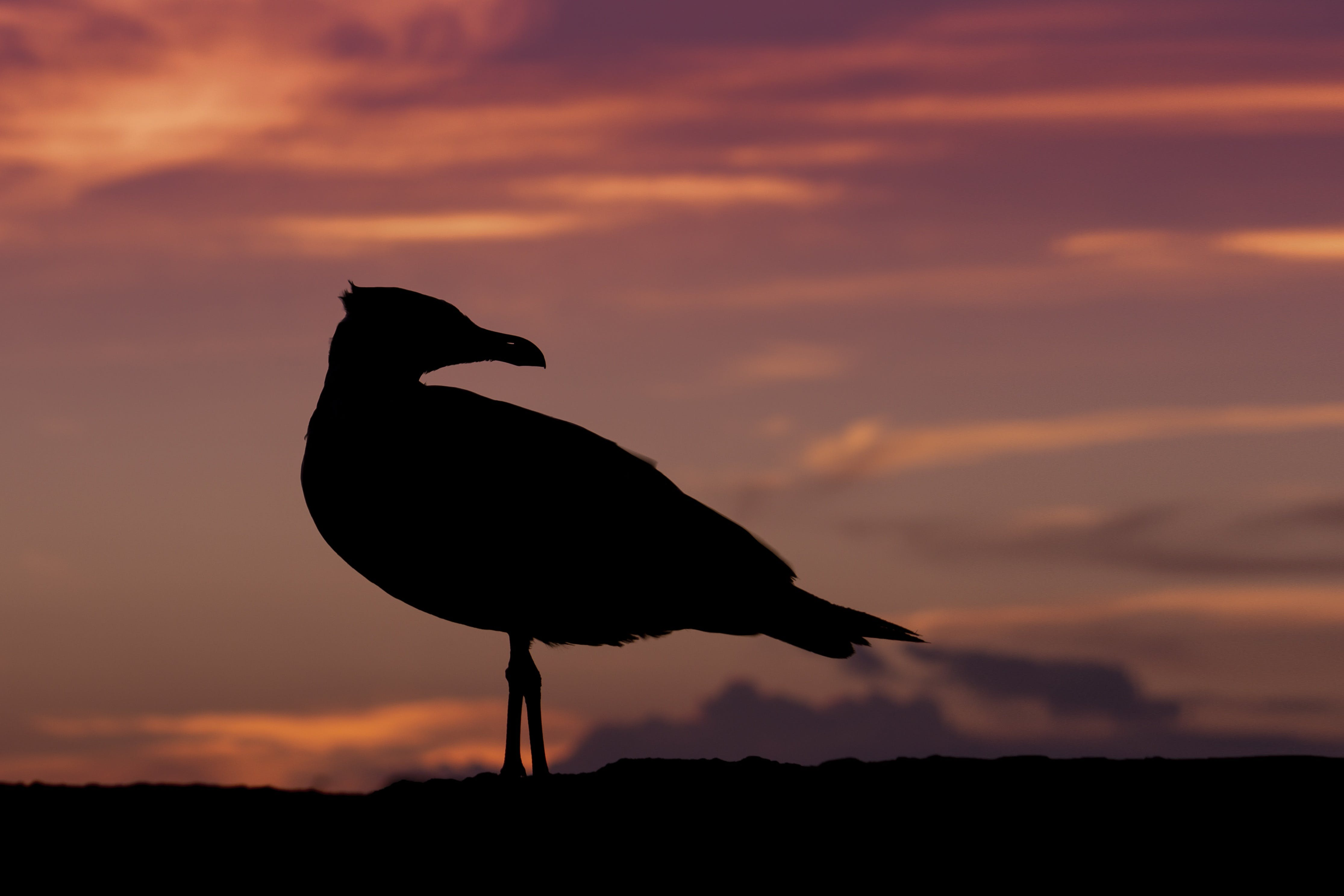 Black Bird on Afternoon View