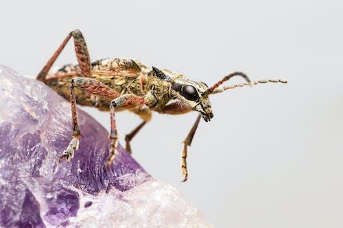 Insecto Marrón Y Negro En Flor Morada