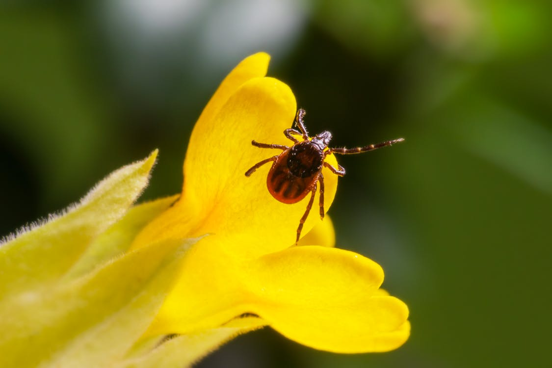 Macro Photography of Insect in Yellow Flower