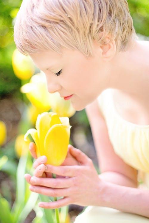 Fotobanka sbezplatnými fotkami na tému čerstvý, flóra, fotenie, kvet