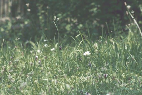 Kostenloses Stock Foto zu blumenwiese, gänseblümchen, retro