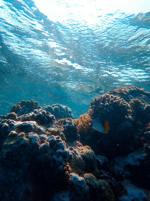 Underwater sea coral reefs and fish
