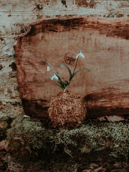 White Flowers on a Wooden Background