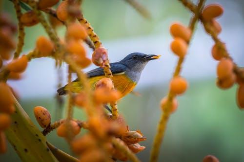 Blue and Yellow Bird Perched on Brown Tree Branch