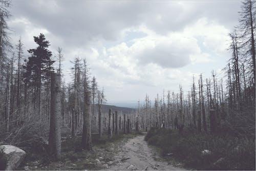 Kostenloses Stock Foto zu bergwald, nadelwald, retro