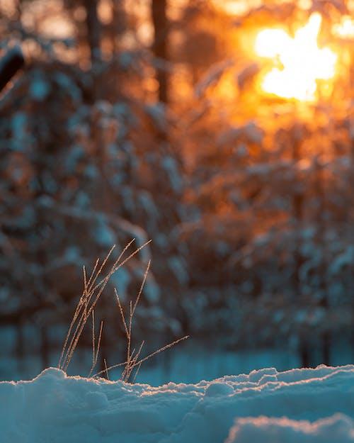 Darmowe zdjęcie z galerii z finlandia, zima, zimowe tło, zimowy chłód