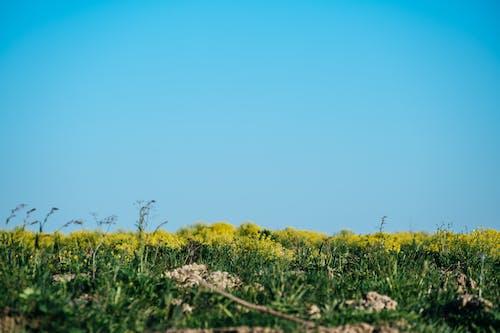 Photos gratuites de bleu, chaud, ciel, clairière