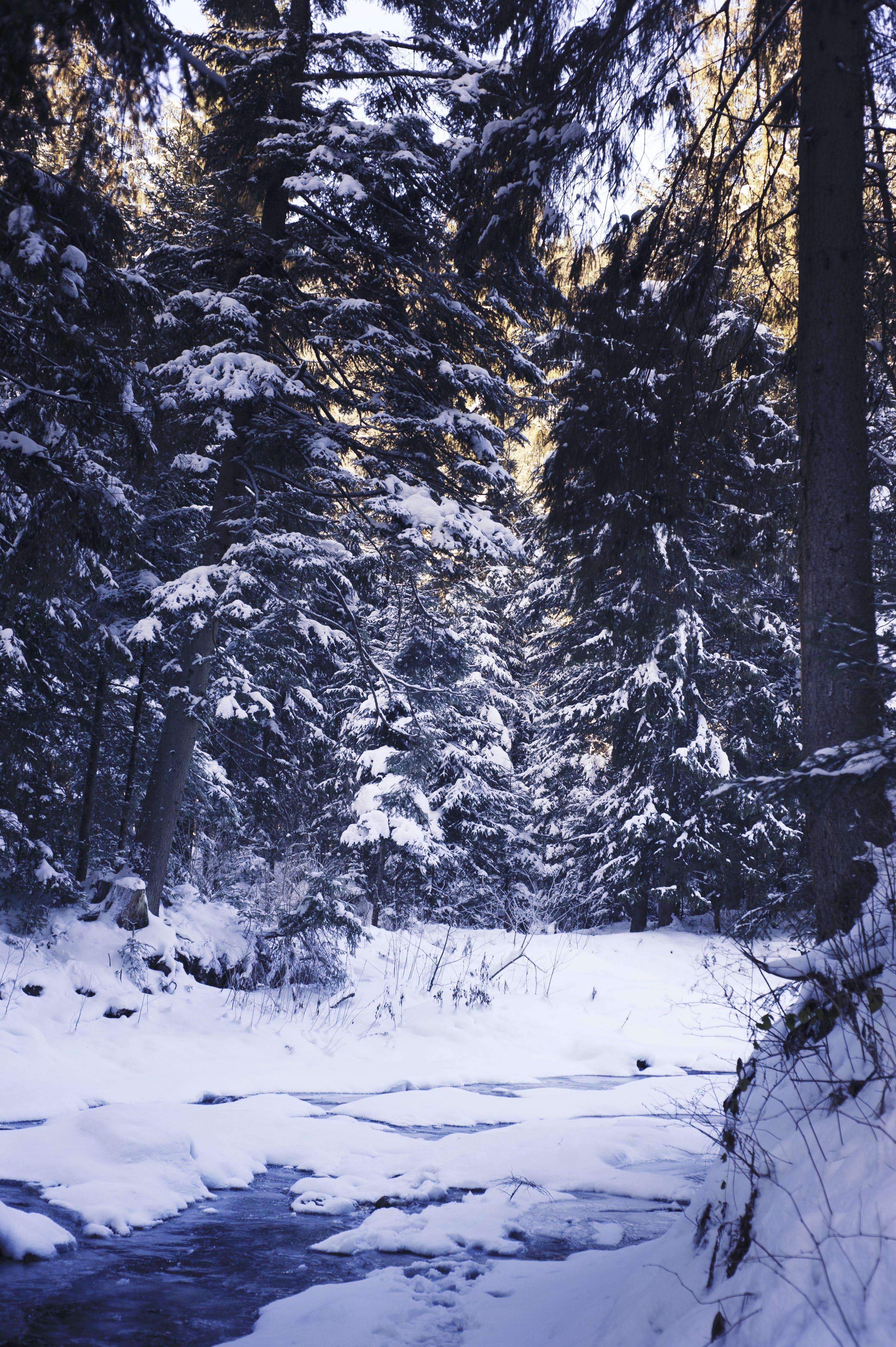Gratis lagerfoto af dag, forkølelse, frost, lys