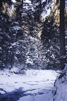 Kostenloses Stock Foto zu kalt, schnee, licht, natur
