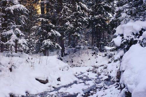 Зеленые деревья в окружении снега