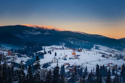 Luftaufnahme Von Häusern, Die Während Der Wintersaison Mit Kiefern Umgeben Sind