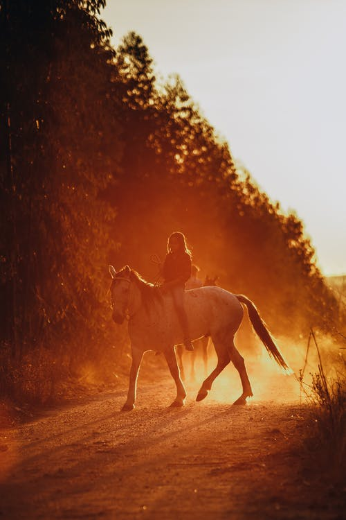 Unrecognizable person riding horse on rural road near lush trees during sunset in countryside