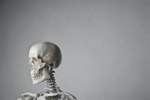 Portrait Photo of a White Skeleton In Front of Gray Background