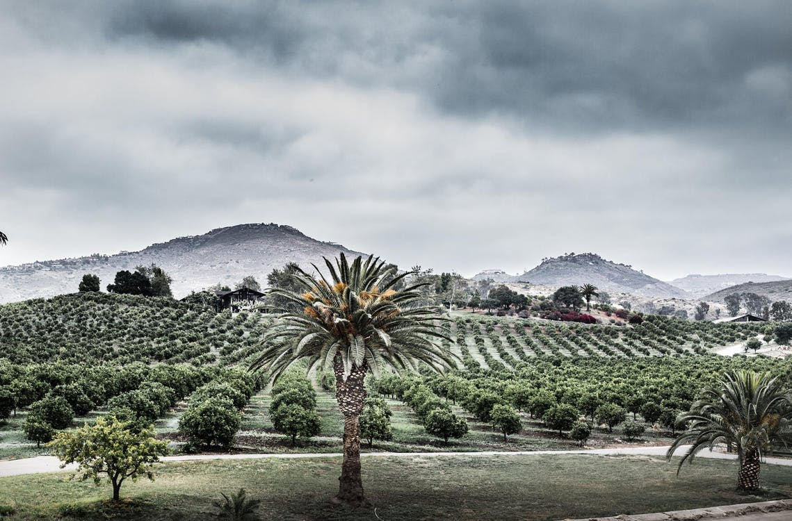 cloudy day, orange grove, san diego