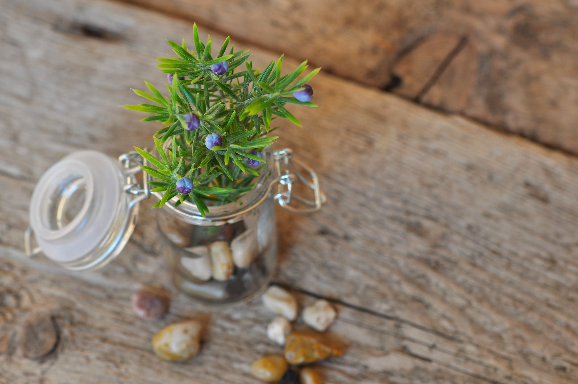 23 DIY Mini Plant Terrarium Ideas | Mini Plant Terrarium