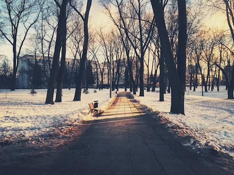 Kostenloses Stock Foto zu kalt, schnee, bank, dämmerung
