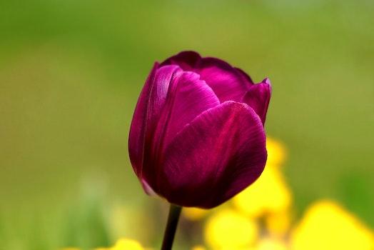 Free stock photo of nature, petals, blur, flower
