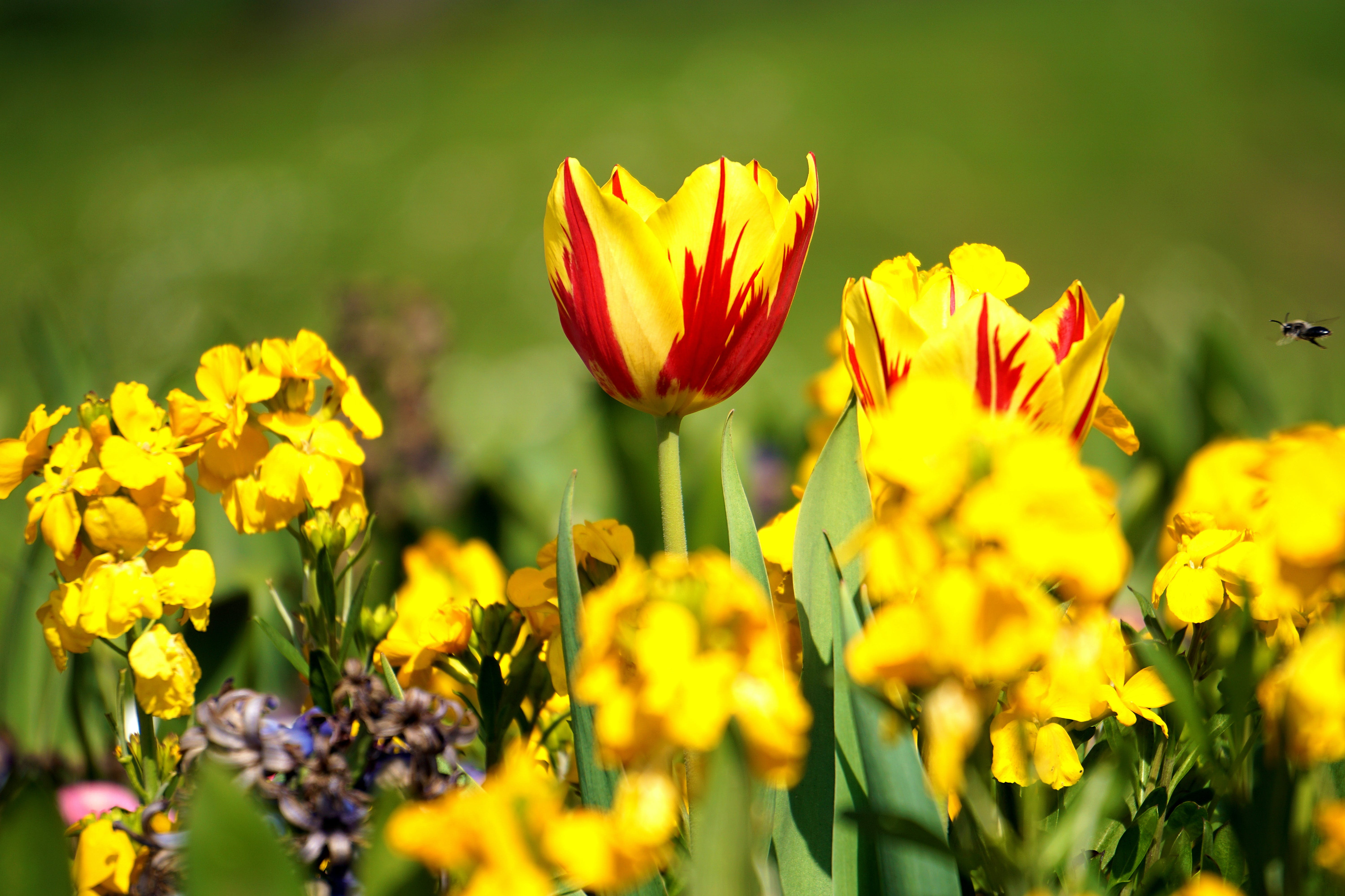 Selective Focus Photography of Yellow Clustered Flowers