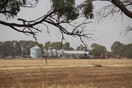 Free stock photo of #farming