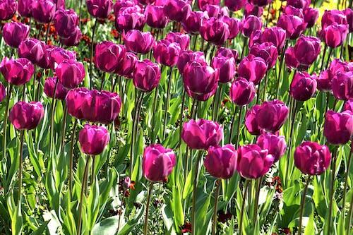 Ảnh lưu trữ miễn phí về bó, bó hoa, cánh đồng, hoa