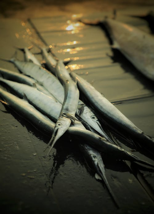Pesce Grigio Sulla Superficie Grigia