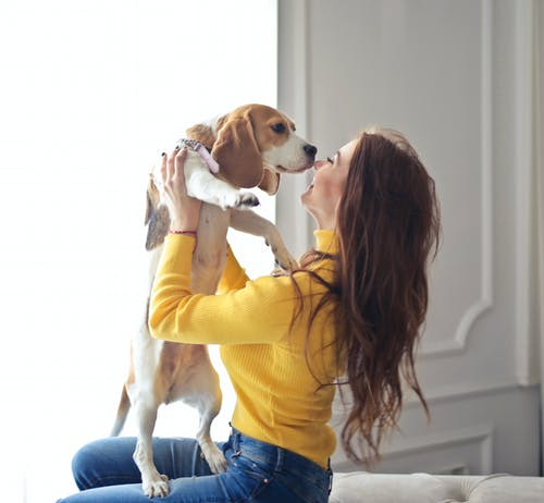 Woman in Yellow Sweater Holding Brown and White Short Coated Dog