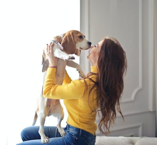 женщина в желтом свитере держит коричнево белую короткошерстную собаку