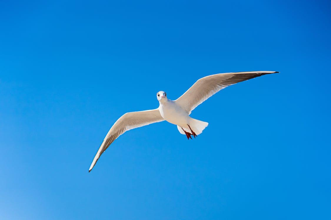 White Gull Flying Under Blue Sky