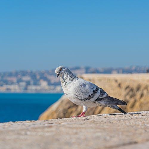 Darmowe zdjęcie z galerii z biały ptak, dzika przyroda, dziki ptak, fotografia ptaków