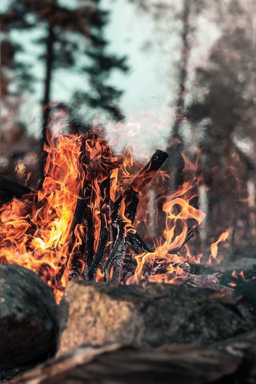 Hout Branden Op Vuurplaats