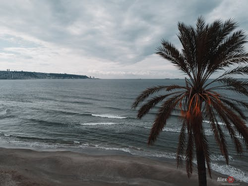 Free stock photo of beach, cloudy, gray, island