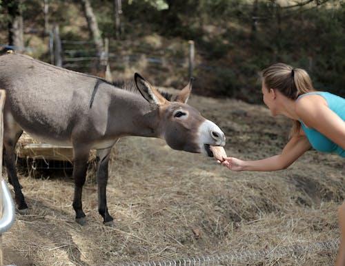 Selective Focus Of Woman Feeding a Donkey