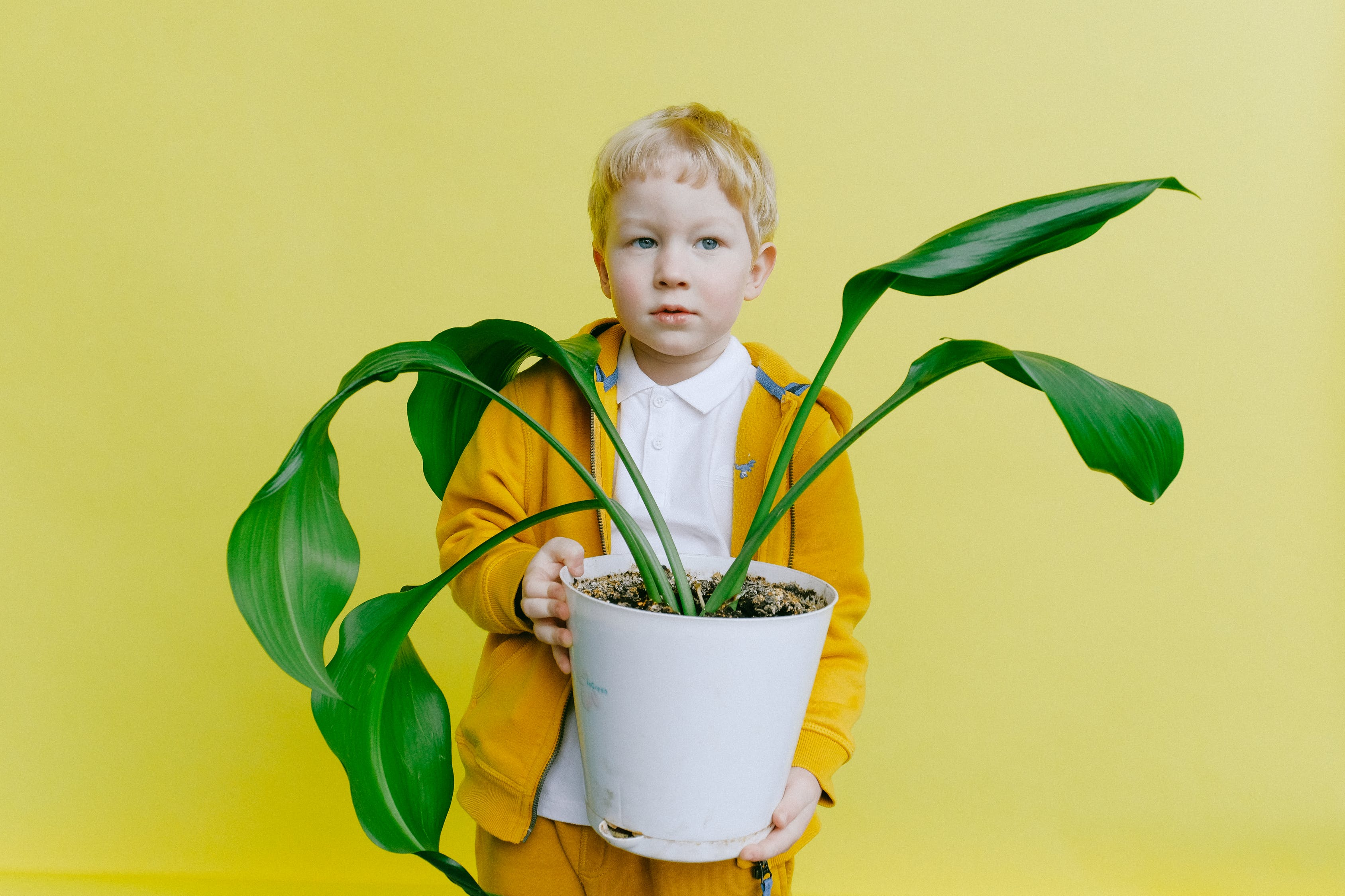 Young Boy in Jacket Holding White Flower Pot