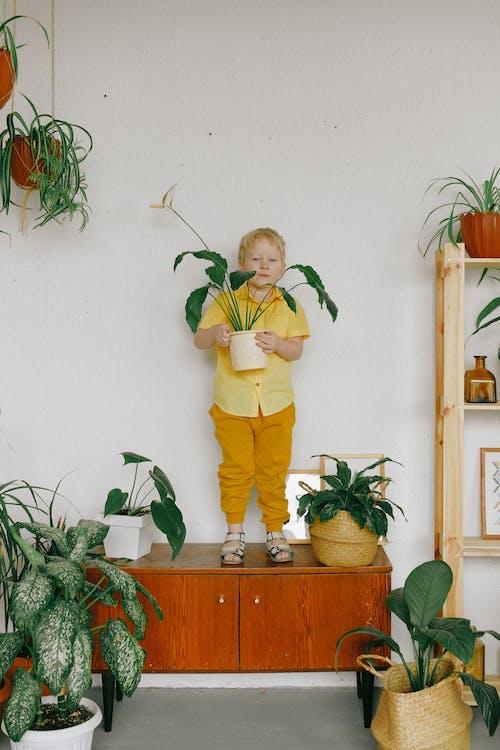 Безкоштовне стокове фото на тему «вирощувати, горщики, декорації, дерев'яний шафа»