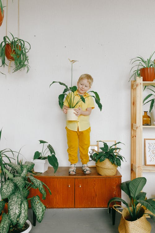 Boy in Yellow Shirt Holding A Potted Plant Standing Beside Green Plants